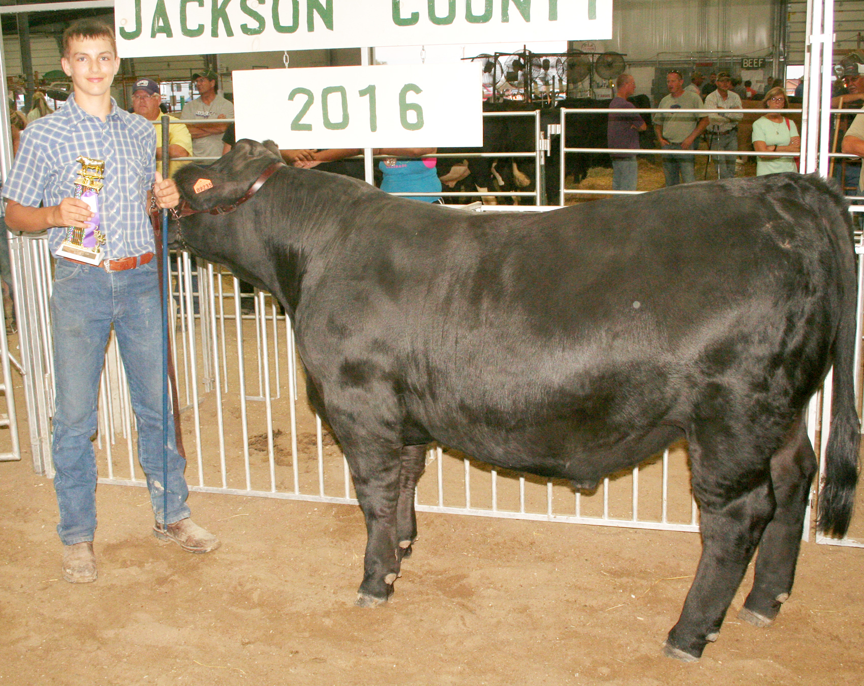 The top Simmental market steer at this year's fair was exhibited by Joel Kennedy of the Soldier Boosters. The steer was also named the top home-raised market steer, a new category at the beef show. (Photo by Brian Sanders)