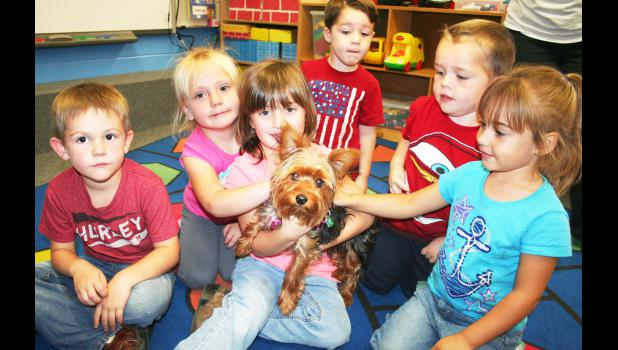Bella (center), a Yorkshire terrier, has found a place in the early childhood special education class at Jackson Heights Elementary School, along with students (from left) Kaleb Dierking, Maggie Wichman, Emma Bellinghausen, Owen Shughart, Brandin Fritz and London Edwards.	(Photo by Brian Sanders)