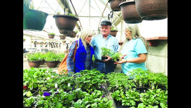 Sandy Snavely, owner of Holton Greenhouse, is shown at right discussing varieties of tomato plants with customers Jim and Jan Lovvorn. Despite the recent cold snap, many people are already beginning to think about spring planting.