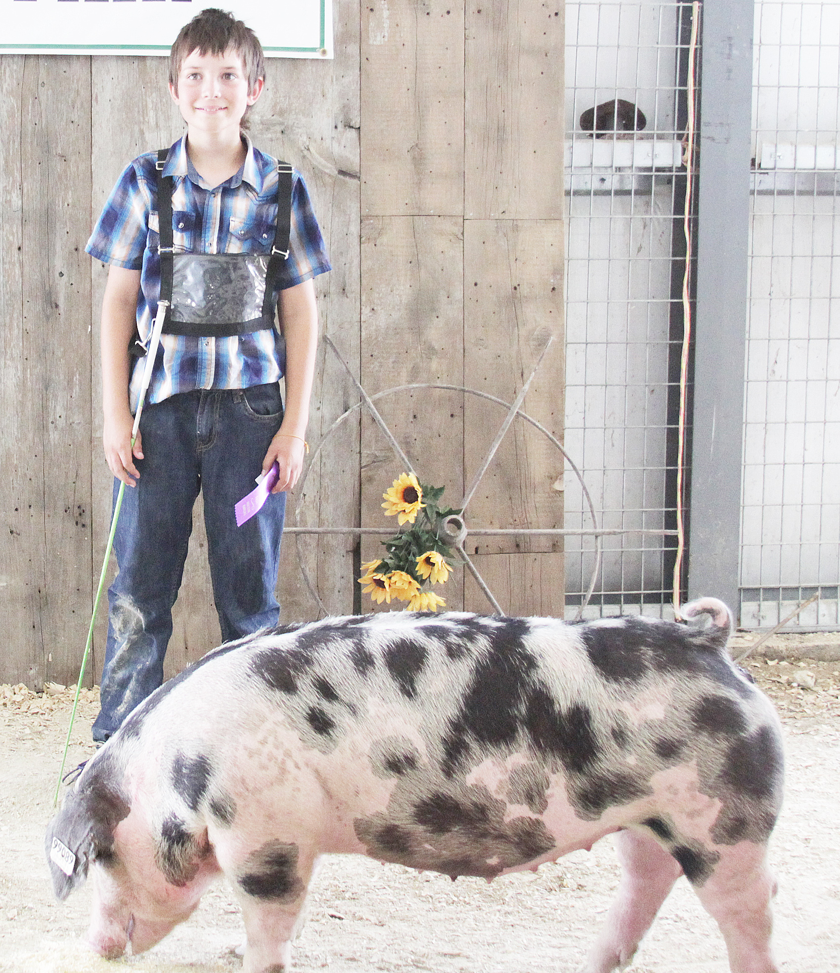 William Beauchamp of the Ontario Busy Bees 4-H Club showed the Champion Spot breeding gilt at the 2020 Jackson County Fair.