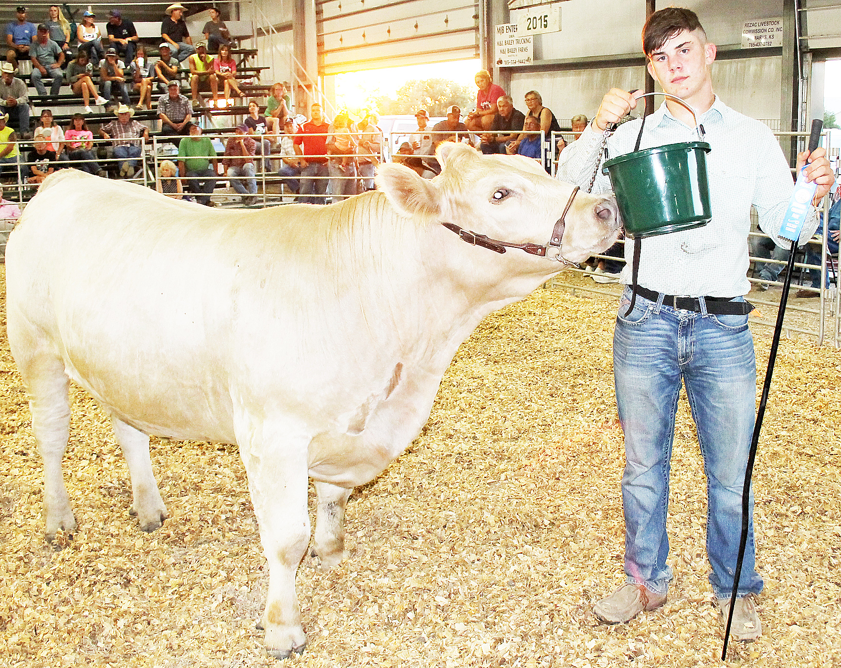 This all-other-breeds market steer, shown by Devin Bloom of the North Jackson Jets, was named reserve steer in its class and was the beef show's rate of gain winner, picking up an average of 3.98 pounds per day between initial weigh-in and the show.