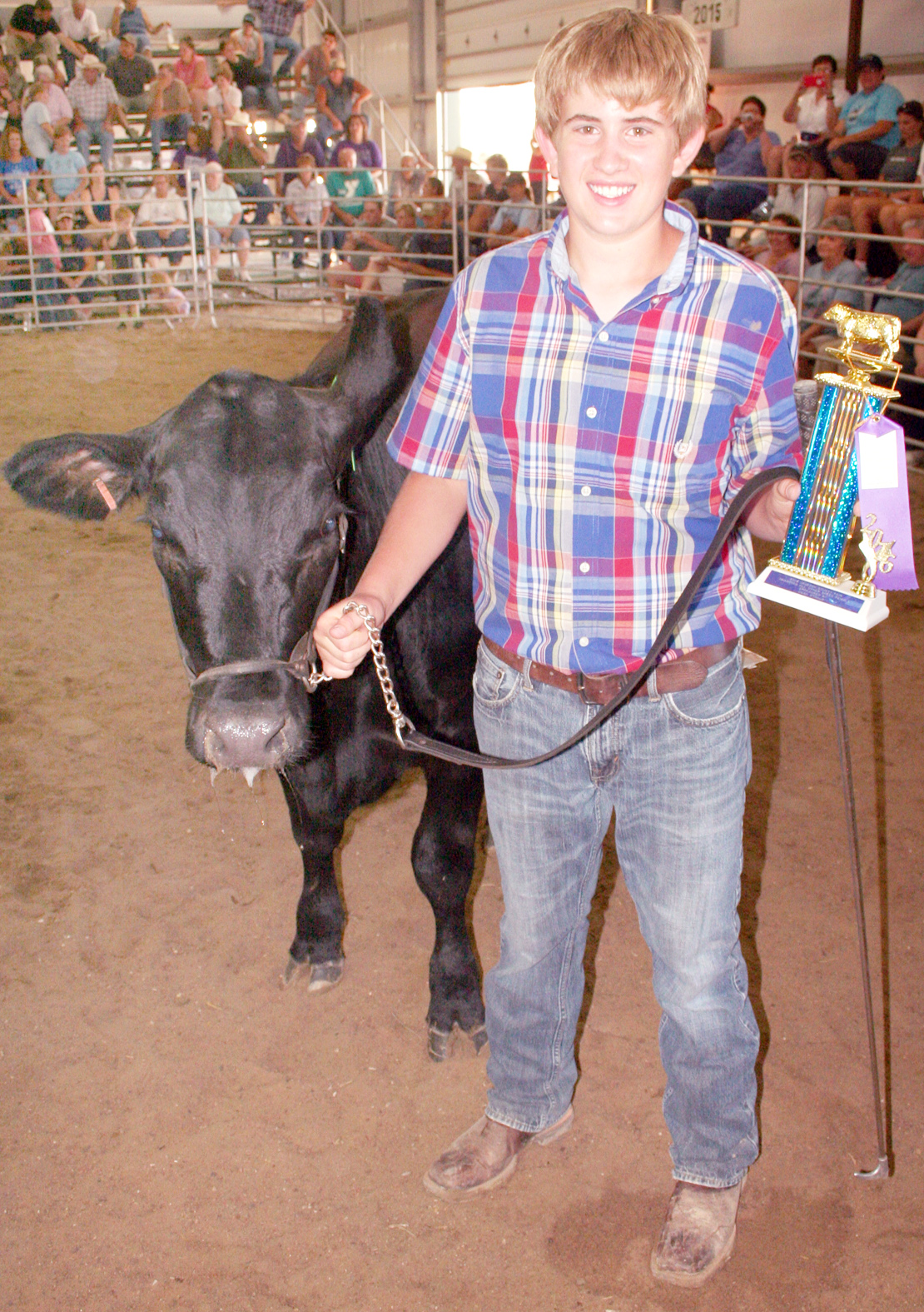 """Best """"all other breeds"""" heifer at the beef show was this Simmental, shown by Aidan Colter of the Hoyt Livewires. (Photo by Brian Sanders)"""