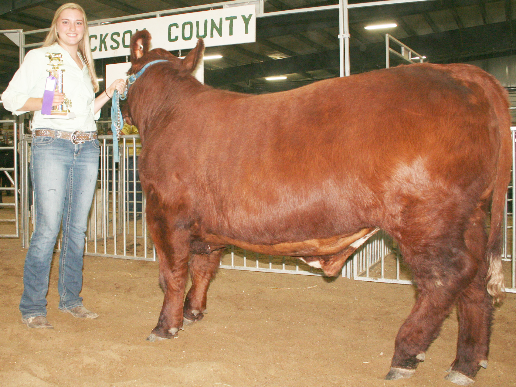 """The best """"all other breeds"""" market steer, a shorthorn, was shown by Michaela Little of the Delia Early Birds. (Photo by Brian Sanders)"""