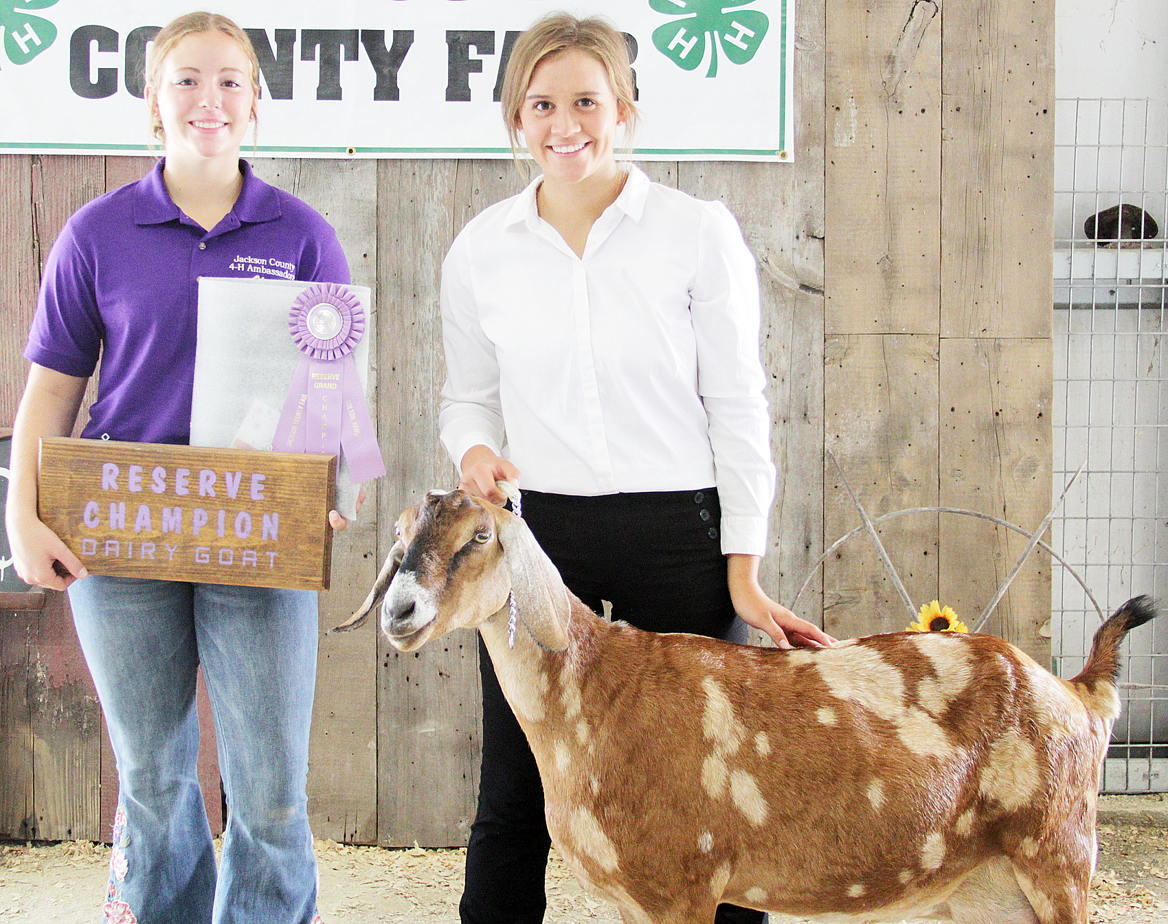 MaKenzie Kennedy of the Soldier Boosters 4-H Club showed the reserve grand champion overall dairy goat at the 2020 Jackson County Fair.