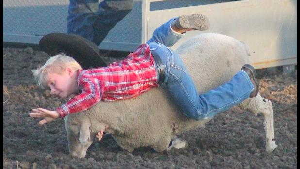 Brody Niccol (shown above) hangs on until the very end while competing in the mutton-busting competition that kicked off the rodeo competition last Friday.